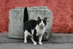 Photo of the stray cat. Homeless animal living on the street.