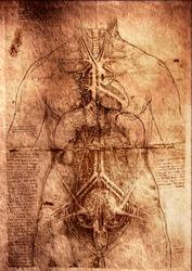 Photo of the Vitruvian Man by Leonardo Da Vinci .