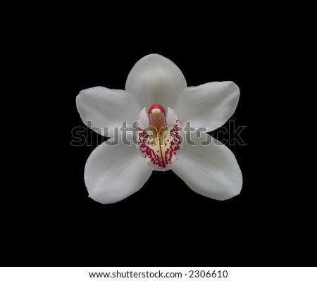 Photo of the white orchid (isolated on black)