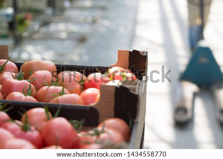 Photo of tomatoes in crate #1434558770