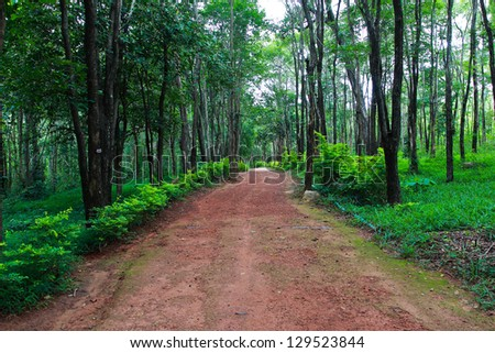 Photo of trails through the forest in the forest Thailand