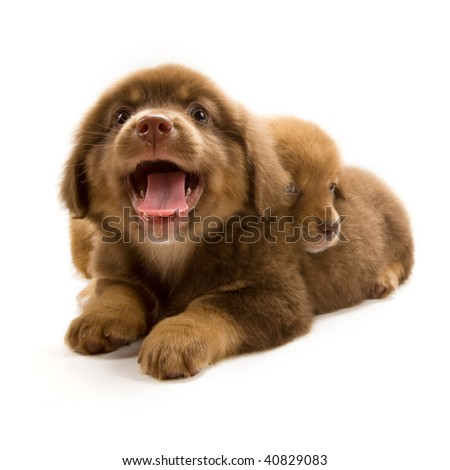 Photo of two cute puppies isolated on white background