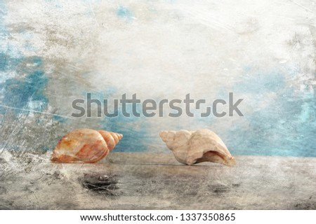 Photo of two seashells.  Artistic image with digital texture layers. Horizontal picture with copy space in upper part.