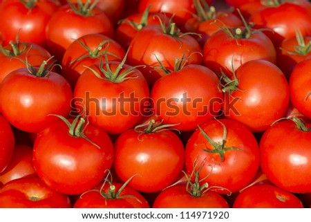 photo of very fresh tomatoes