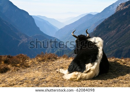Photo of Yak with beautiful valley on background, Everest region, Nepal.