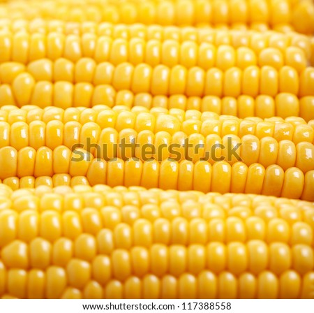 Photo of yellow corn background, abstract backgrounds, harvest season, healthy organic nutrition, maize cob, golden textured wallpaper, fresh prepared grain, tasty vegetable, vegetarian meal