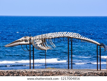 Photo Picture of the Dry Whale Mammal Skeleton