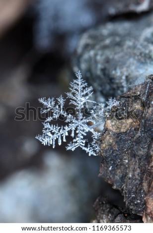 photo real snowflakes during a snowfall