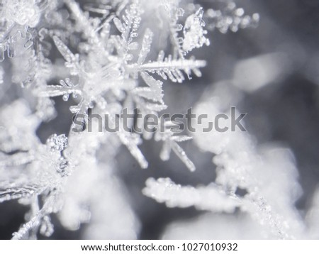 photo real snowflakes during a snowfall, under natural conditions at low temperature #1027010932