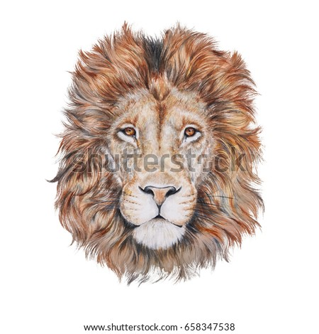 Photo realistic water color portrait of a lion on white background #658347538