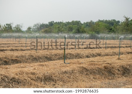 photo rows of soil before planting. Furrows row pattern in a plowed field prepared for planting crops in spring. view of land prepared for planting and cultivating the crop.