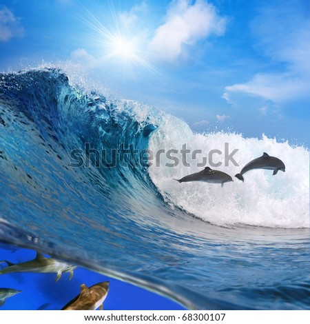 Photo separated by waterline. Two happy playful dolphins leaping from ocean breaking surfing wave to foam and other part of its flock swimming underwater