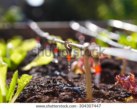 photo shows irrigation system in raised garden bed Foto stock ©