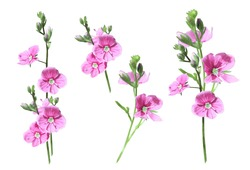 photo small pink flowers on a white background