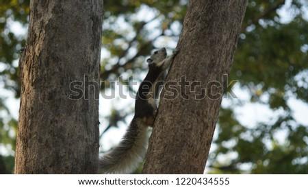 photo squirrel at park #1220434555