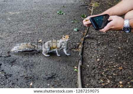 Photo to a squirrel in London.