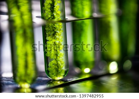Photobioreactor in laboratory, algae fuel biofuel industry, plant treatment research in industrial laboratories for virus protection vaccine, coronavirus COVID-19 medicine protection concept