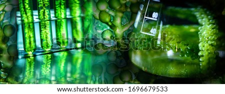 Photobioreactor in laboratory of algae fuel, biofuel industry project, Algae research in industrial laboratories for medicine