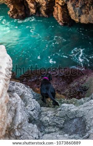 Stock Photo Photograph of a dog on the coast of Menorca.