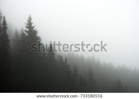 Photograph of a forest in the fog #733180516