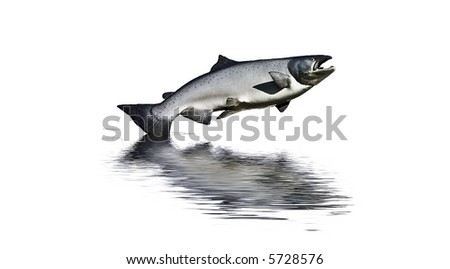 Photograph of a large model salmon with reflected water added