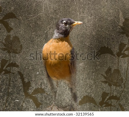 photograph of a robin with added layers