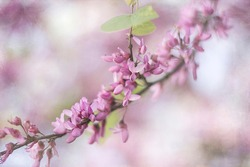 photograph of a tree branch full of pink flowers, the background is out of focus and the branch creates a diagonal that crosses the plane. Furthermore, the image is textured, giving a romantic touch