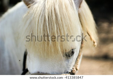 Photograph of a white horse #413385847
