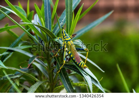 Photograph of an insect perched on  leaf of a horticultural plant #1340426354