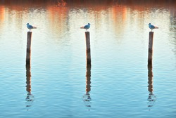 Photograph of seagulls resting on a wooden fence. Quality image.