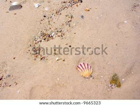 Photograph taken at Henley Beach featuring a small scallop shell (Adelaide, South Australia).