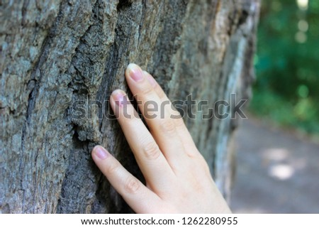 Photographed in a light dis focus of the fingers that touch the bark of the old tree. It's symbolizing the connection between humans and nature.