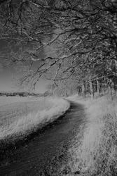Photographed with infrared camera in Sweden 2020 and converted to blackandwhite.