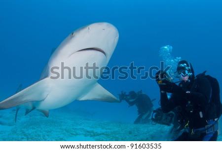 photographer has a bull shark swim in close