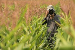 Photographer holding camera on wheat fields in warm sunset.