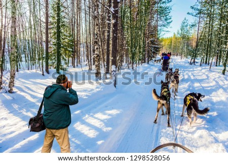 Photographer in a green jacket takes pictures of a winter forest and a husky dog sled.  Great ride on finnish husky sled dogs. Lapland. The concept of extreme and active tourism