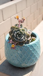 Photographer of a flower pot with suculent