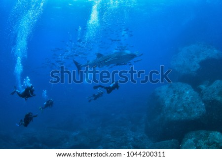 Photographer Scuba diving and camera in hand with whale shark  at Losin sea , Thailand. #1044200311