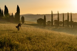 Photographers take landscape pictures early in the morning, Tuscany, Italy