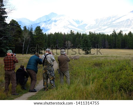 Photographers taking pictures of wapiti (elks) in Jasper National Park, Canadian Rockies