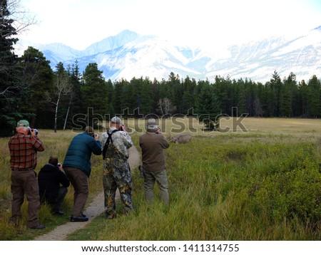 Photographers taking pictures of wapiti (elks) in Jasper National Park, Canadian Rockies