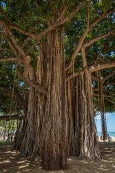 Photographs of Oahu, Waikiki and Hawaii