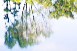 Photography blur tree reflection on water