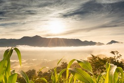 photography of a magical natural landscape of a sunrise in cornfields with clouds with a shining sun behind the mountains and an incredible cloudy sky