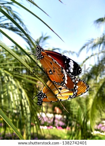 Photography of insect and butterfly around me. #1382742401