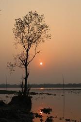 Photography of tree shadow with sundown