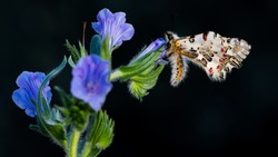 photos of butterflies from wildlife and nature