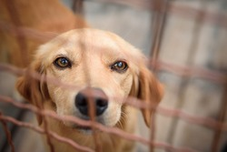 Photos of shelter dogs living in fenced boxes. Dogs have medical care, quality nutrition until adoption, regular walks and socializing with other dogs and people.