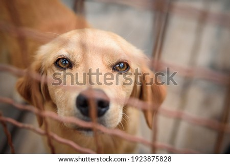 Photos of shelter dogs living in fenced boxes. Dogs have medical care, quality nutrition until adoption, regular walks and socializing with other dogs and people. Foto stock ©