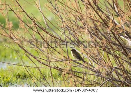 photos of wildlife and wildlife birds #1493094989